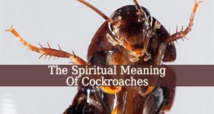 Spiritual Meaning Of Cockroaches