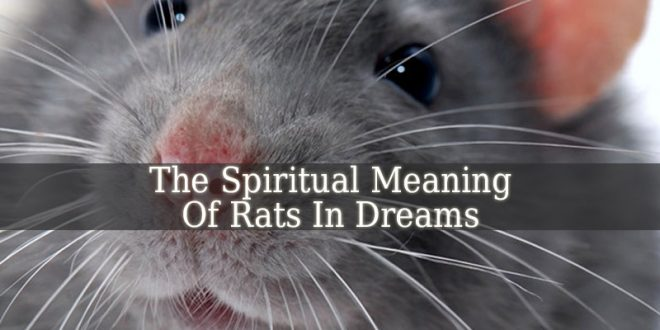 Spiritual Meaning Of Rats In Dreams