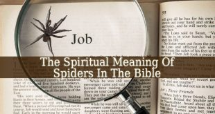 Spiritual Meaning Of Spiders In The Bible