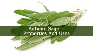 Autumn Sage