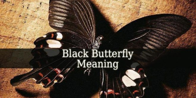Black Butterfly Meaning