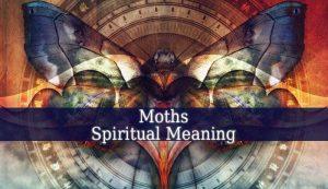 Moths Spiritual Meaning