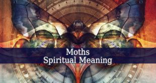 Moths Spiritual Meaning