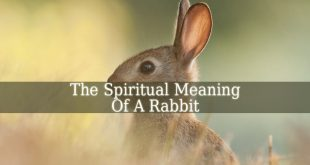 Spiritual Meaning Of Rabbit
