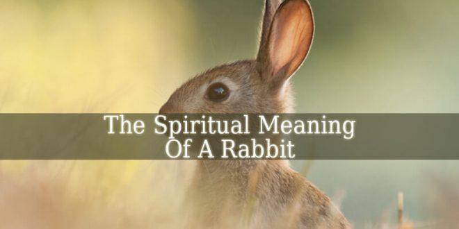 Spiritual Meaning Of Rabbit