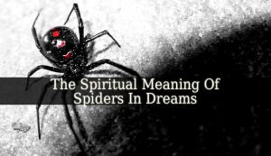 Spiritual Meaning Of Spiders In Dreams