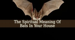 Spiritual Meaning Of Bats In Your House